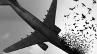 رابطه ماجرای هواپیمای اوکراینی با تصمیم AFC